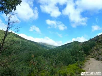 Hayedo Montejo-Cuerda Pinilla; viajes en noviembre rutas pedriza senderismo cercedilla
